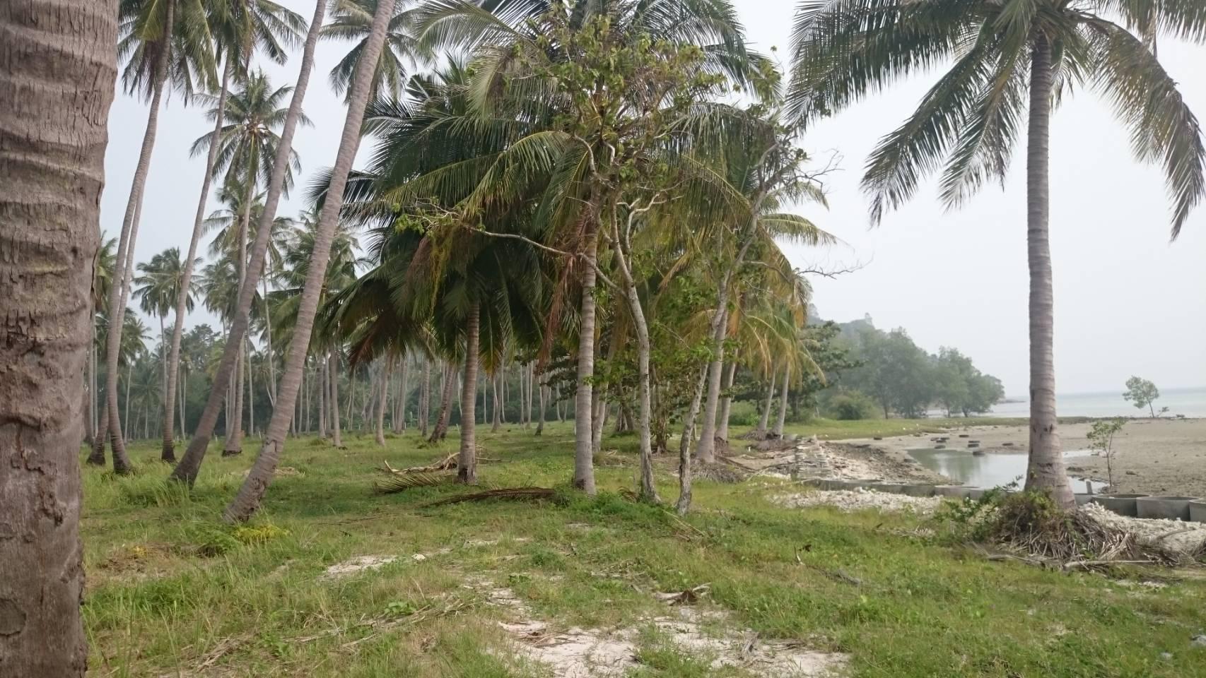 ขายที่ดินติดหาดท้องกรูท เกาะสมุย 5