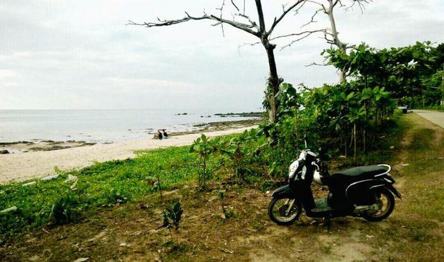 ขาย ที่ดินติดชายหาด สวยมาก เกาะลันตา เพื่อทำรีสอร์ท บ้านพัก 3